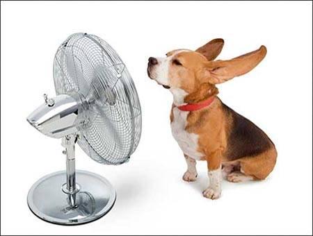 Aire acondicionado y mascotas